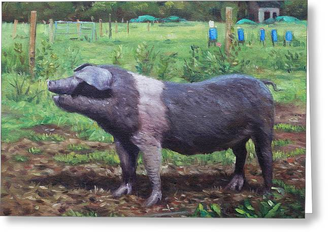Black Pig Greeting Cards - Black And White Pig on Farm Greeting Card by Martin Davey