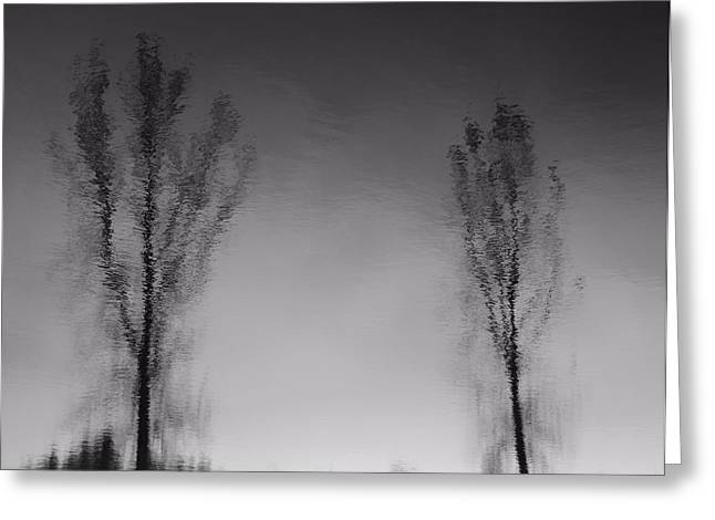 D.w Greeting Cards - Black And White Reflection Trees Greeting Card by Dan Sproul
