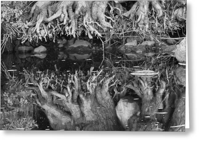 Tree Roots Photographs Greeting Cards - Black And White Root Reflection Greeting Card by Dan Sproul