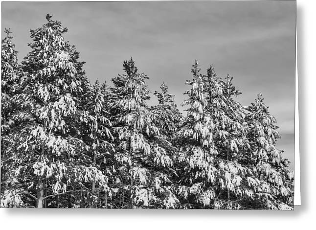 Snow-covered Landscape Greeting Cards - Black and White Snow Covered Trees Greeting Card by Brandon Bourdages