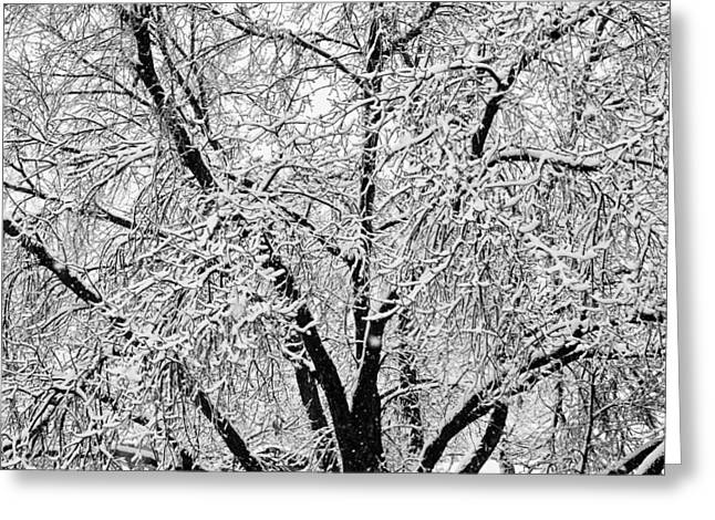Gifts Greeting Cards - Black and White Snowy Tree Branches Abstract 2 Greeting Card by James BO  Insogna