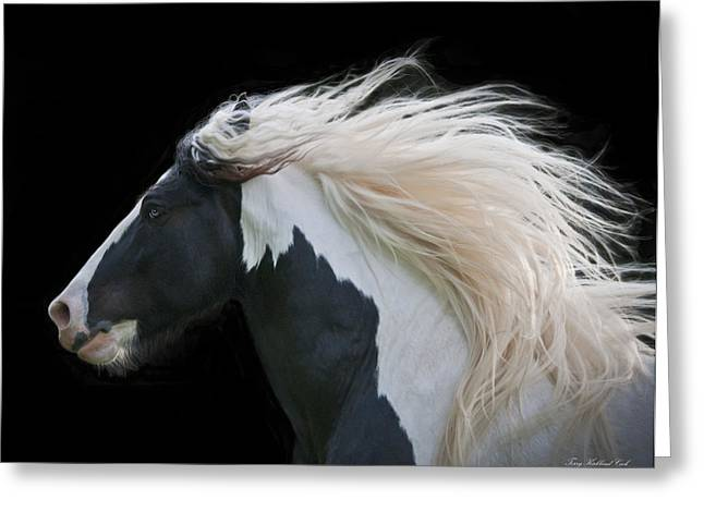 Gypsy Vanner Horse Greeting Cards - Black and White Study III Greeting Card by Terry Kirkland Cook