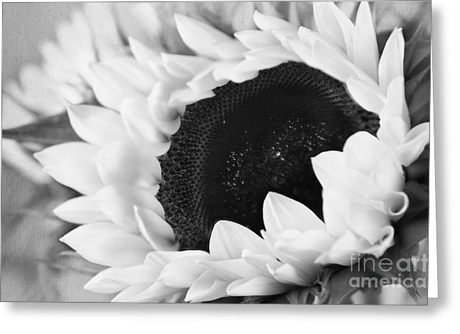 Floral Photos Greeting Cards - Black and White Sunflower Greeting Card by Eden Baed