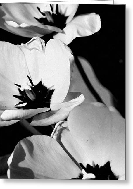 Moving Petals Greeting Cards - Black And White Trio Of Tulips Greeting Card by Rosemarie E Seppala