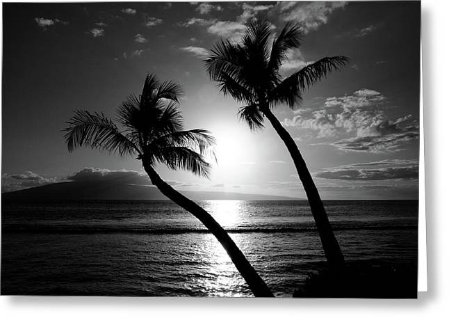 Coconut Palm Tree Greeting Cards - Black and White tropical Greeting Card by Pierre Leclerc Photography