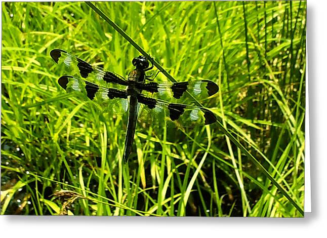 Dragonfly Picture Greeting Cards - Black and white winged Dragonfly Greeting Card by Chris Flees