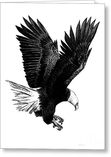 Flying Animal Drawings Greeting Cards - Black and White with Pen and Ink drawing of American Bald Eagle  Greeting Card by Mario  Perez