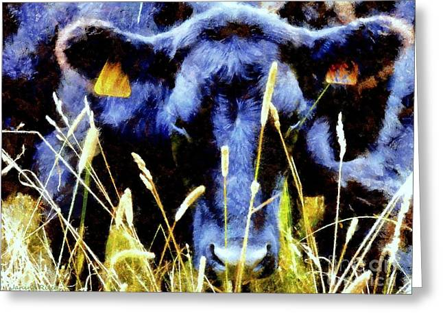 Moo Moo Greeting Cards - Black Angus Cow  Greeting Card by Janine Riley