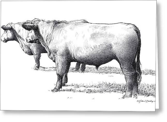 Steer Drawings Greeting Cards - Black Angus Steers on Almshouse Road Greeting Card by William Beauchamp