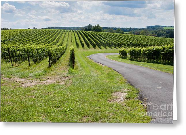 Maryland Vinyard In August Greeting Card by Thomas Marchessault