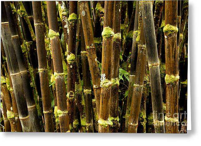 Valuable Photo Greeting Cards - Black Bamboo of Panaewa Greeting Card by Kenton Wandasan
