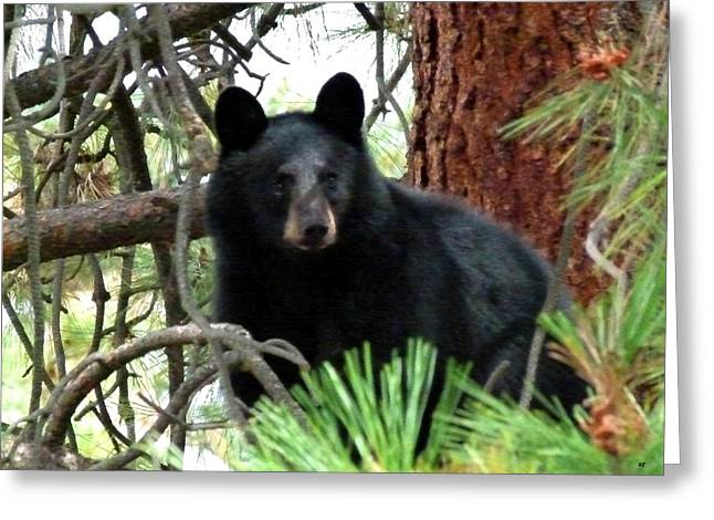 Okanagan Valley Greeting Cards - Black Bear 1 Greeting Card by Will Borden