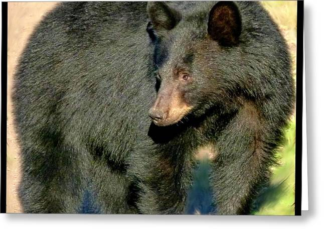 Cautious Greeting Cards - Black Bear 3 Greeting Card by Will Borden