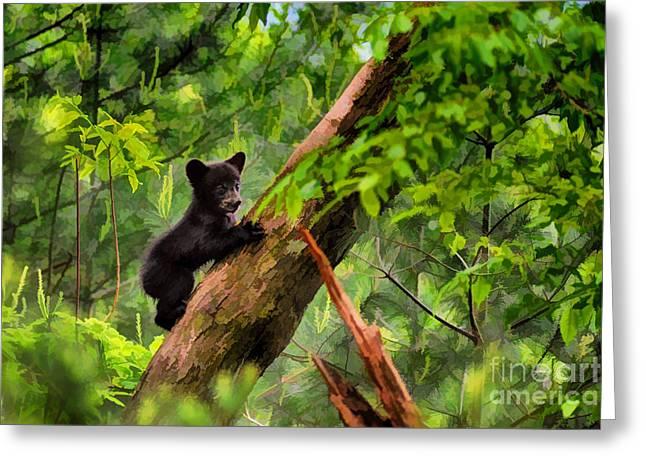 Black Bear Climbing Tree Greeting Cards - Black bear cub climbing in tree and looking around  - artistic Greeting Card by Dan Friend