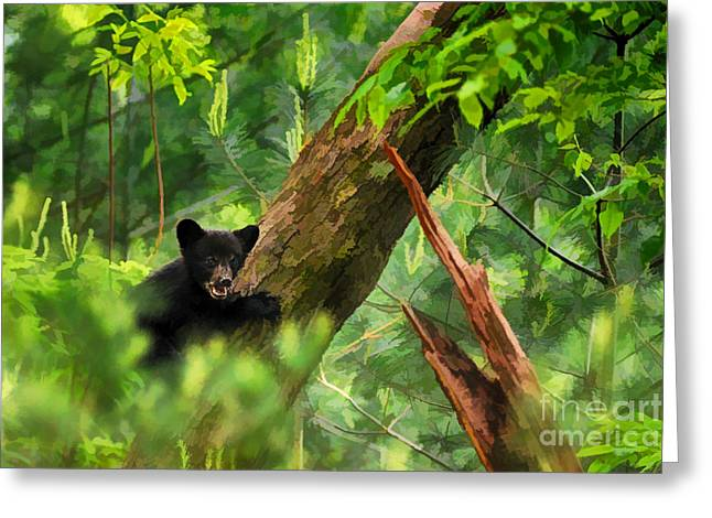 Black Bear Climbing Tree Greeting Cards - Black bear cub in tree  - artistic Greeting Card by Dan Friend