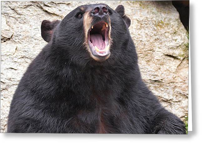Growling Greeting Cards - Black Bear roaring Greeting Card by Mary Almond