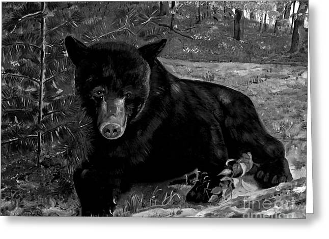 Alertness Paintings Greeting Cards - Black Bear - Scruffy - Black and White Greeting Card by Jan Dappen