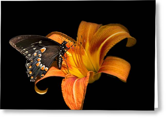 Butterfly On Flower Greeting Cards - Black Beauty Butterfly Greeting Card by Christina Rollo