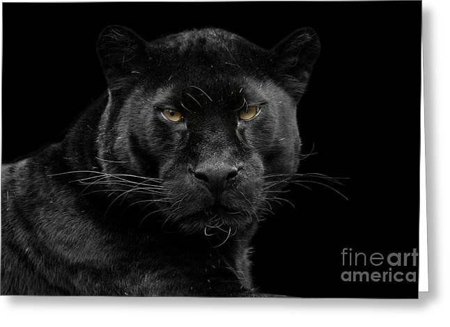 Wildcats Pyrography Greeting Cards - Black beauty Greeting Card by Gea Strucks