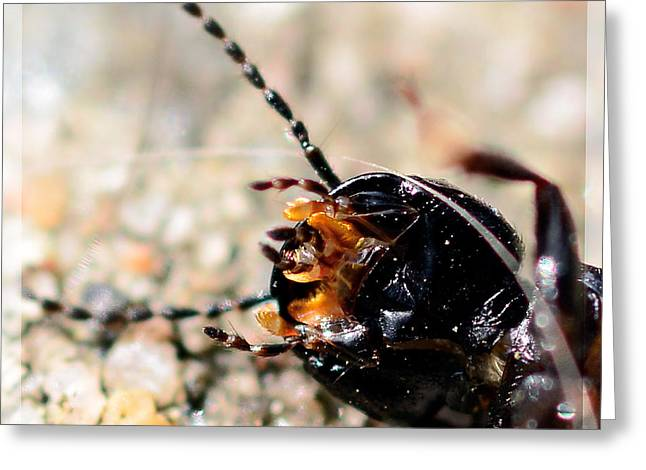 Antenna Mixed Media Greeting Cards - Black beetle shows its tentacles  Greeting Card by Toppart Sweden