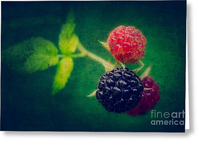Black Berries Photographs Greeting Cards - Black Berry with Texture Greeting Card by Todd Bielby