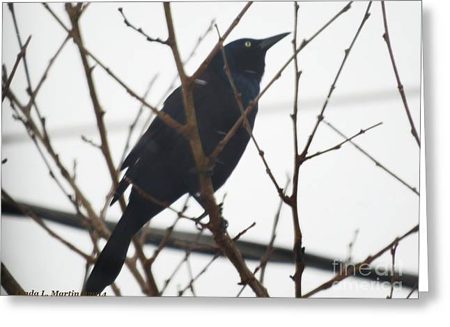 Llmartin Greeting Cards - Black Bird Anticipation Greeting Card by Linda L Martin