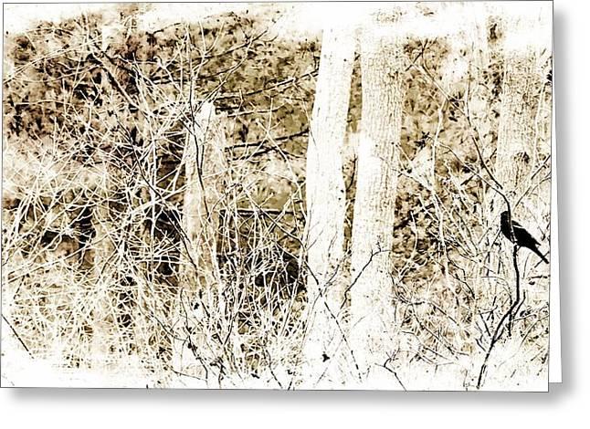 Engraving Greeting Cards - Black Bird Greeting Card by Marcia Lee Jones