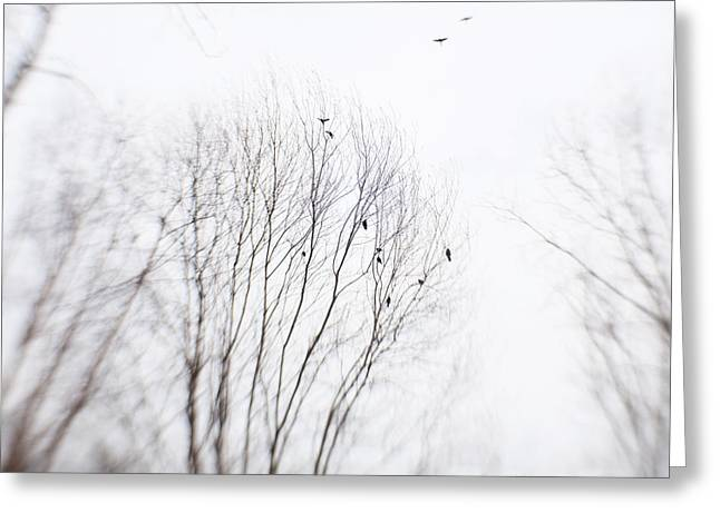 Flying Bird Greeting Cards - Black Birds Greeting Card by June Marie Sobrito