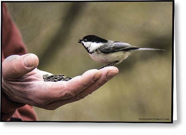 Wild Orchards Greeting Cards - Black-capped Chickadee Bird in hand  Greeting Card by LeeAnn McLaneGoetz McLaneGoetzStudioLLCcom