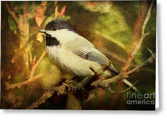 Back Yard Birds Greeting Cards - Black Capped Chickadee Greeting Card by Lianne Schneider
