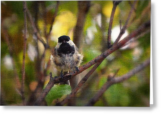 Bird On Tree Greeting Cards - Black Capped Chickadee Greeting Card by Maria Angelica Maira