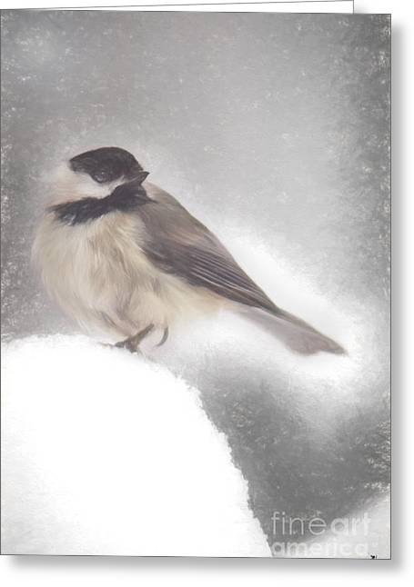 Snow Capped Greeting Cards - Black Capped Chickadee Greeting Card by Sandra Clark