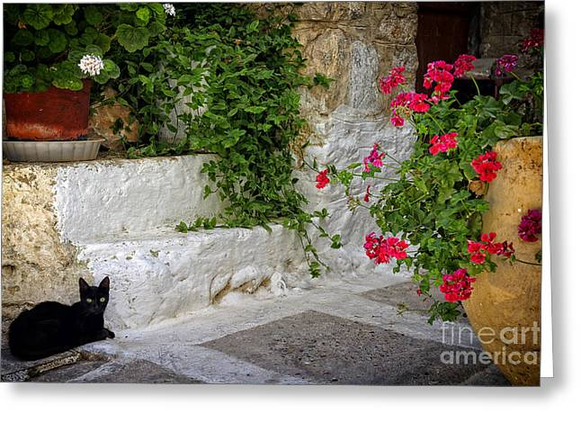 Chios Greeting Cards - Black cat and flowers. Mesta. Chios. Greece. Greeting Card by Steven Sklifas