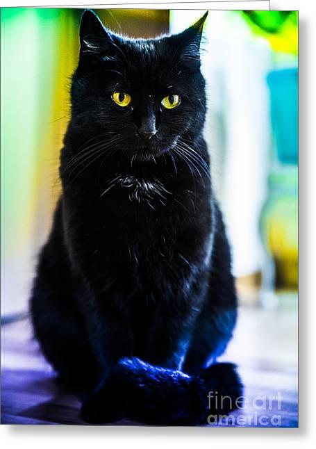 British Portraits Pyrography Greeting Cards - Black cat Greeting Card by David Dravinac