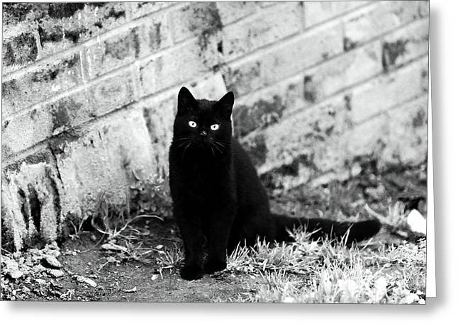 Evil Place Greeting Cards - Black Cat Greeting Card by John Rizzuto
