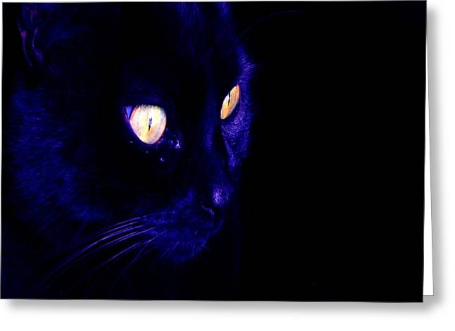 Owner Digital Greeting Cards - Black Cat Photograph Halloween Eyes Greeting Card by Tracey Harrington-Simpson