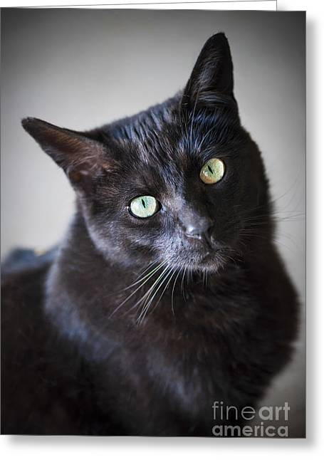 Tilted Greeting Cards - Black cat portrait Greeting Card by Elena Elisseeva
