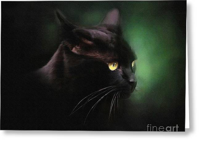 Kitten Prints Greeting Cards - Black Cat Greeting Card by Robert Foster