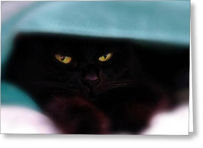 Black Cat Secrets Greeting Card by Bob Orsillo