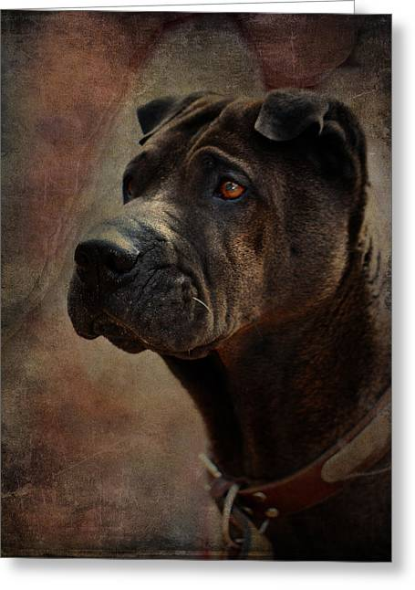Chinese Dogs Greeting Cards - Black Chinese Shar-Pei Greeting Card by Terry Fleckney