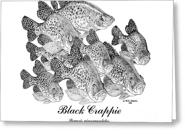 And Black Crappie Greeting Cards - Black Crappie-Poxomis nigromaculatus Greeting Card by Mike Howell
