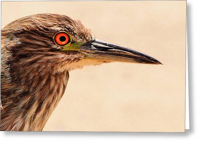 Orange And Brown Wings Greeting Cards - Black Crowned Night Heron 4 Greeting Card by  Bob and Nadine Johnston