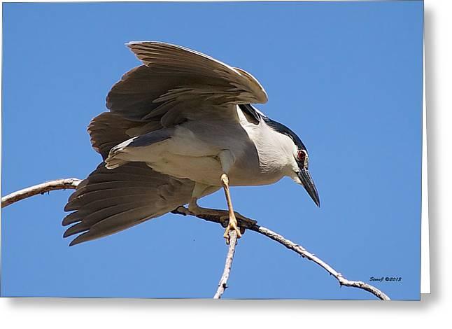 Black Crowned Night Heron Hanging On Greeting Card by Stephen  Johnson