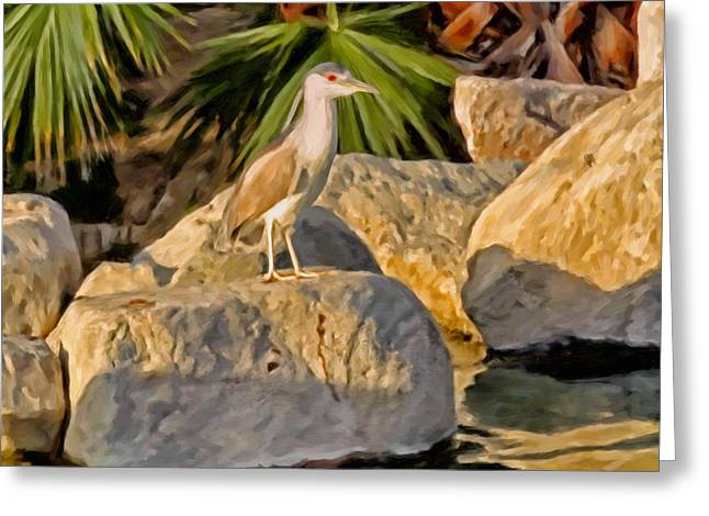 Crowned Heron Greeting Cards - Black Crowned Night Heron Greeting Card by Michael Pickett