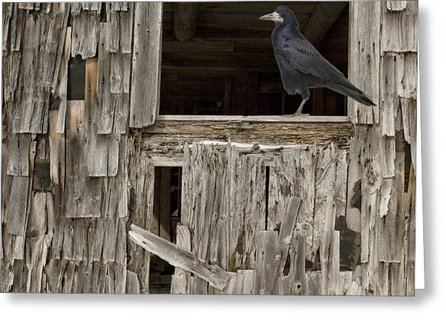 Black crows at the old barn Greeting Card by Edward Fielding