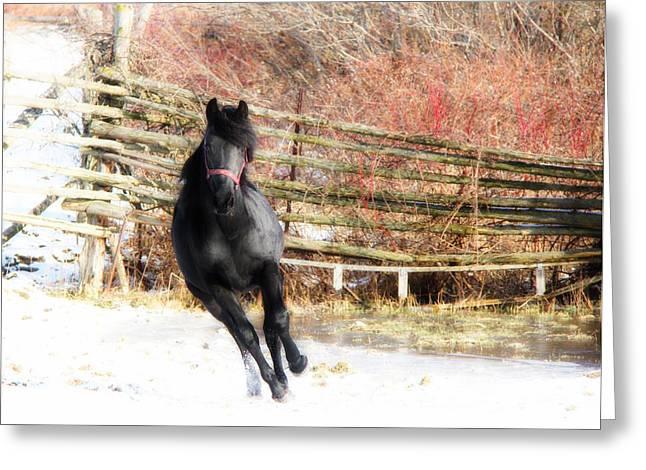 Horse Greeting Cards - Black Diamond Jubilee 1 Greeting Card by Davandra Cribbie