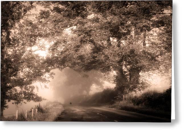 Ghost Like Greeting Cards - Black Dog on a Misty Road. Misty Roads of Scotland Greeting Card by Jenny Rainbow