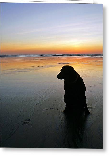 Tidal Photographs Greeting Cards - Black Dog Sundown Greeting Card by Pamela Patch