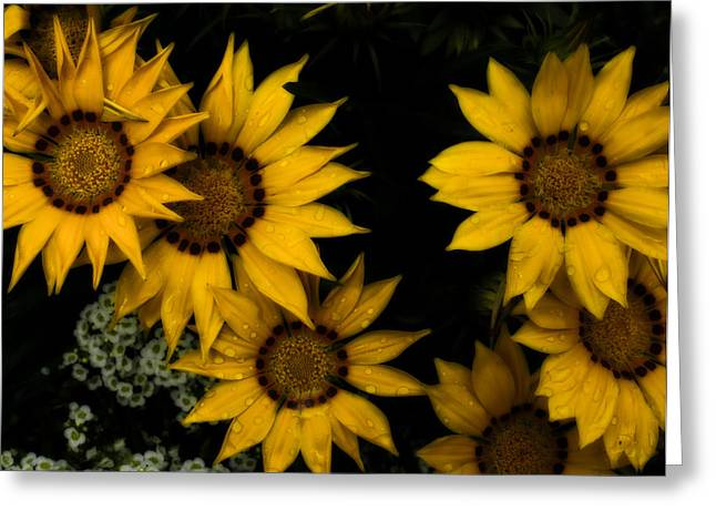 Daiseys Greeting Cards - Black Dotted Daisey Greeting Card by Chad Tracy