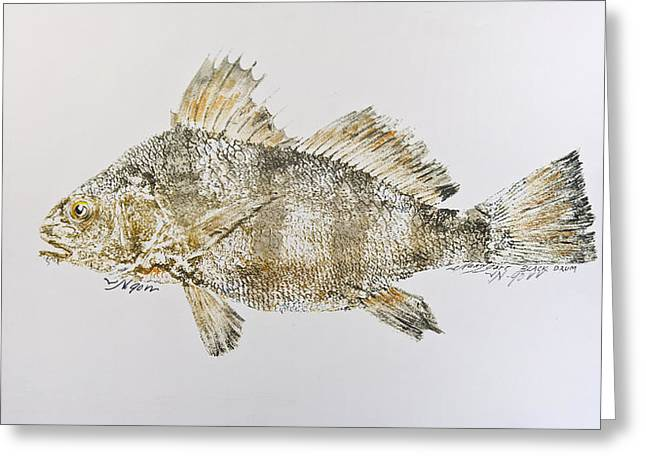 Nancy Gorr Greeting Cards - Black Drum Greeting Card by Nancy Gorr